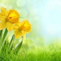 HVAC Spring Maintenance Checklist